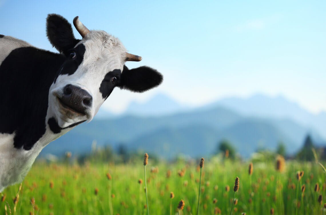 The Bovine Guide To Healthy Eating | Dr. William Davis