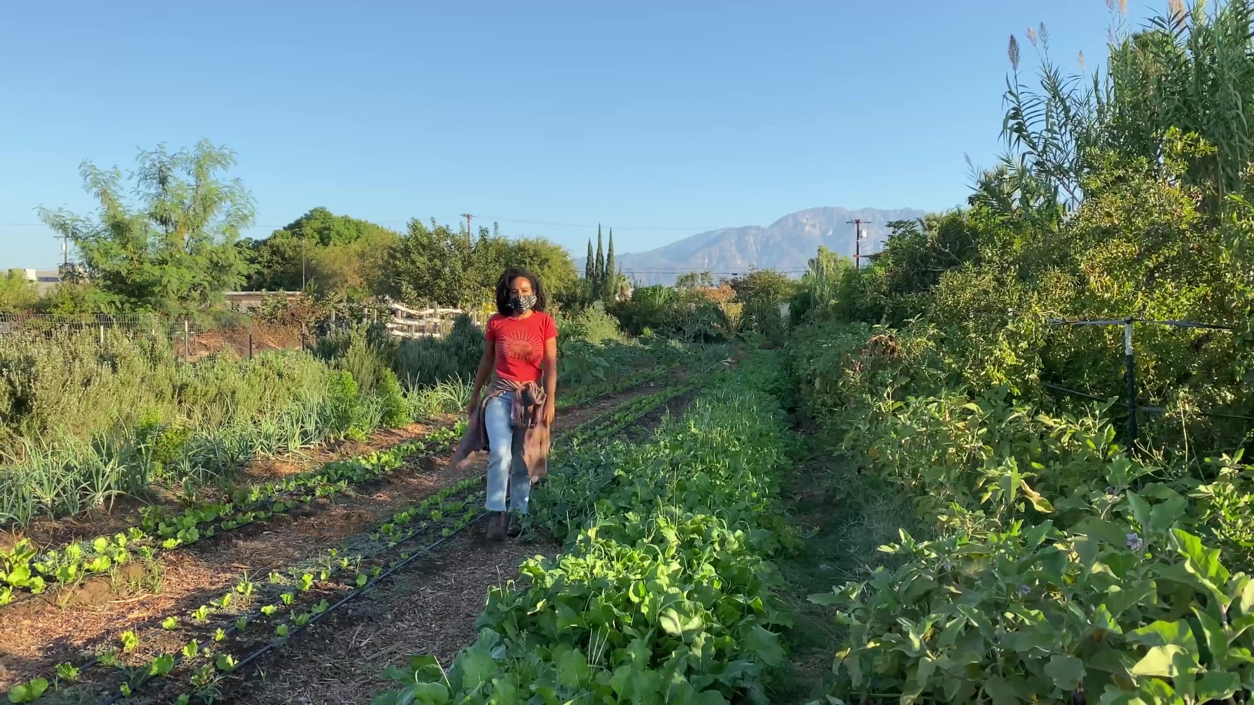 'we Need To Feed Ourselves': How One Grassroots Organization Is Fighting For 'black Futures' Through Healthy Eating